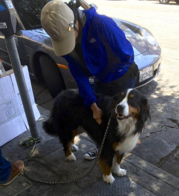 Woman Petting A Happy Bernese Mountain Dog