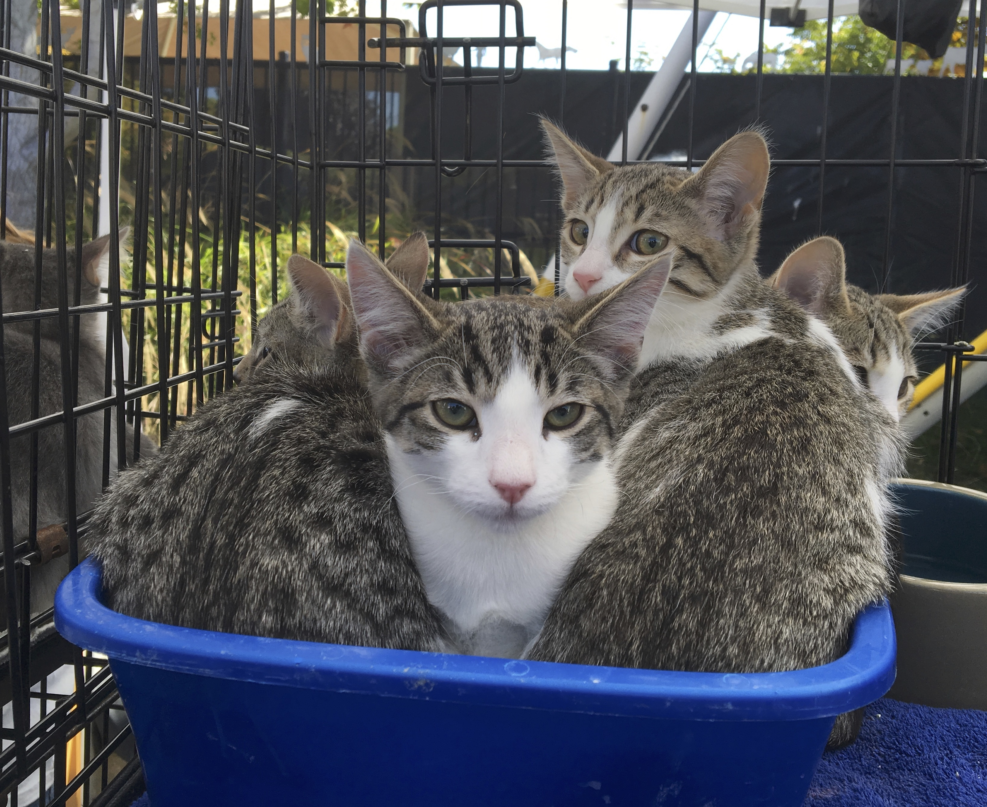 A Pile Of Kittens Sitting In A Litterbox