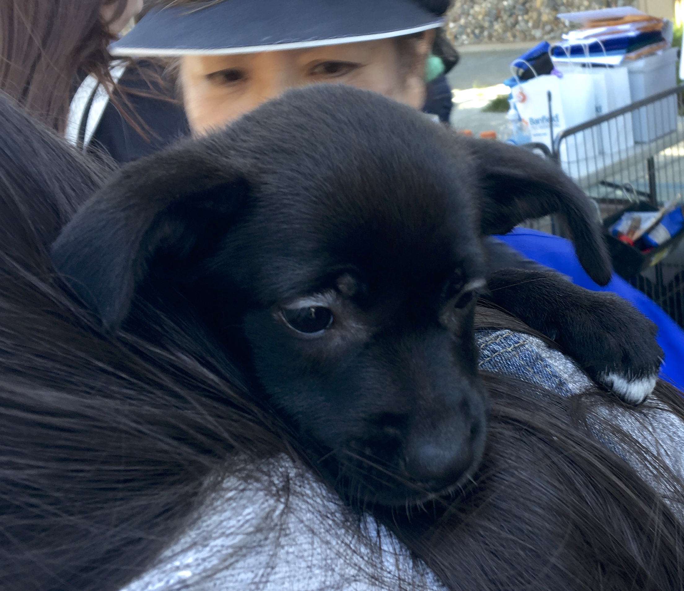 Labrador Retriever Mix Puppy Being Hugged