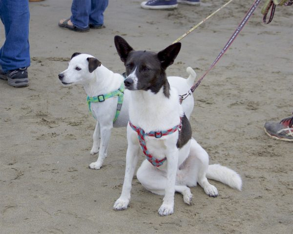 One Border Collie And Another Dog Sitting On The Beach In Goofy Poses