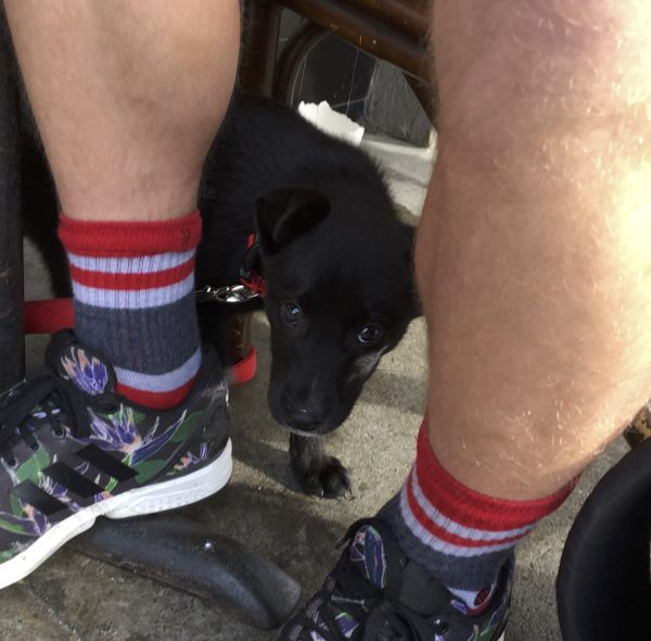 4 Week Old Black Border Collie Labrador Retriever Mix Peeking Out From Behind Man's Legs