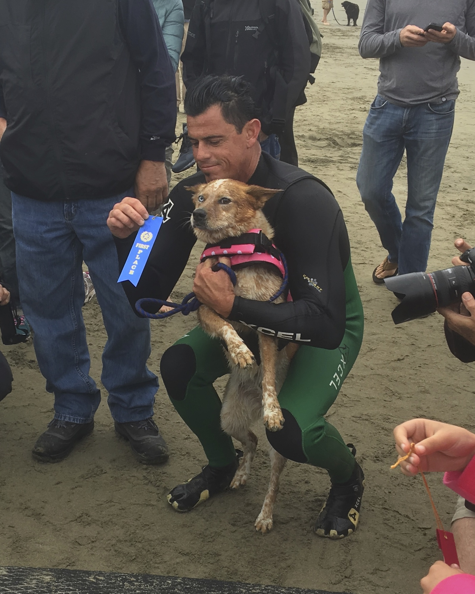 Australian Cattle Dog With Heterochromia In A Pink Coat Being Awarded A Blue Ribbon On A Beach