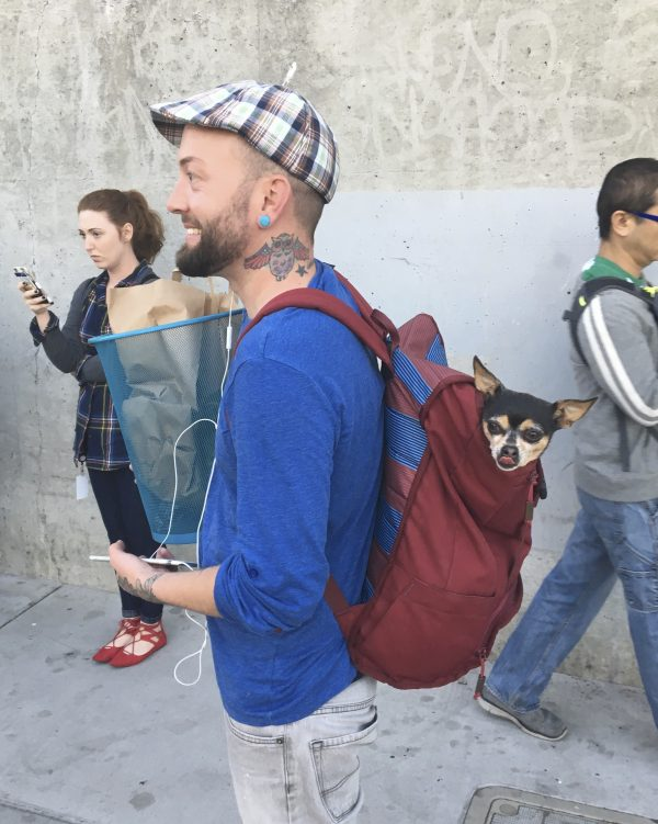 Man Wearing Backpack With Chihuahua In It