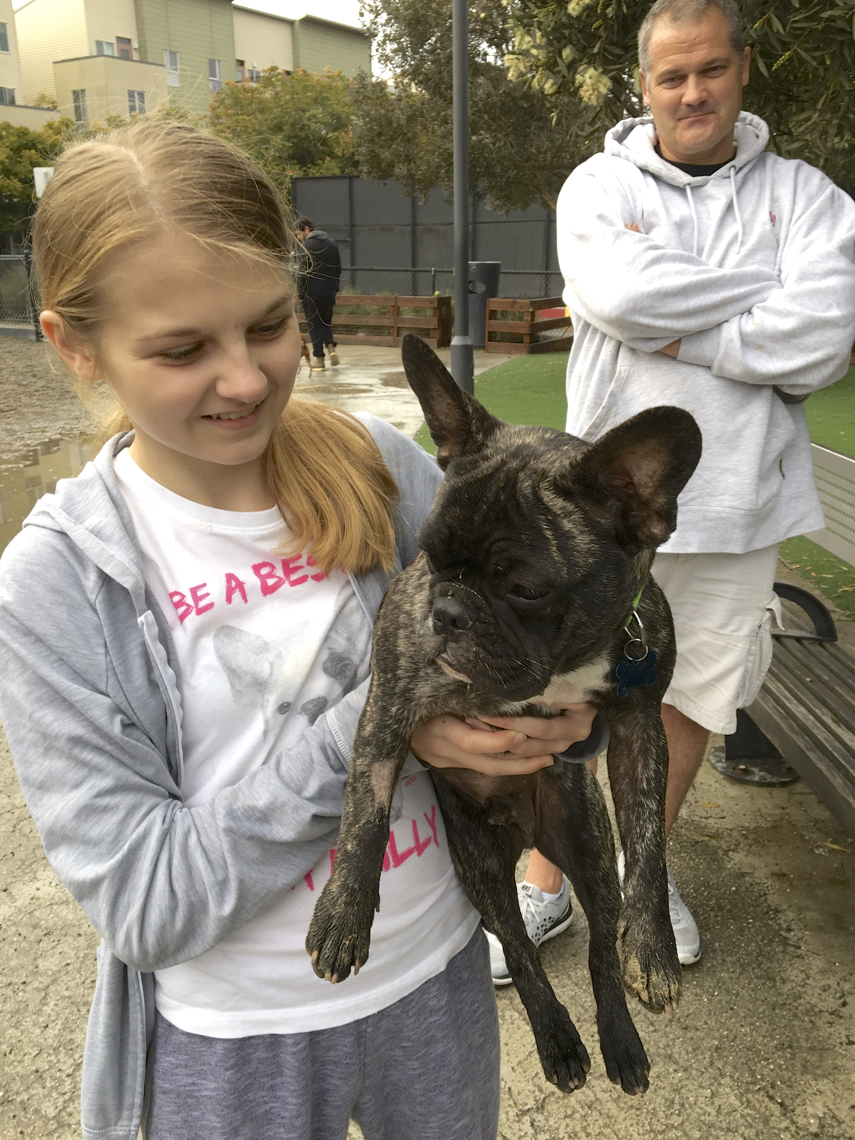 Girl Holding Brindled French Bulldog With White Chest