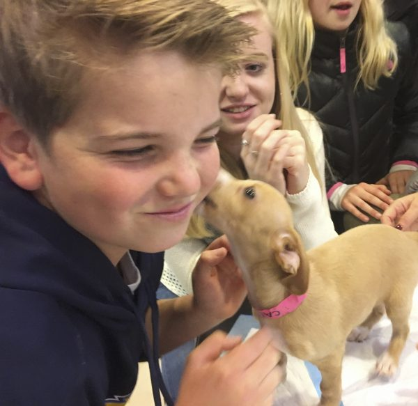 People Considering Adopting Cute Puppy At Macy's San Francisco
