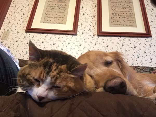 Golden Retriever And Cat Sleeping Next To One Another