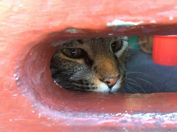 Cat Peering Through Mail Slot Of Door