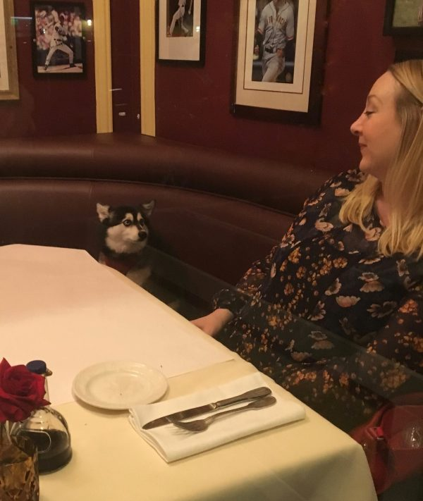 Woman And Klee Kai Staring Into One Another's Eyes In Italian Restaurant