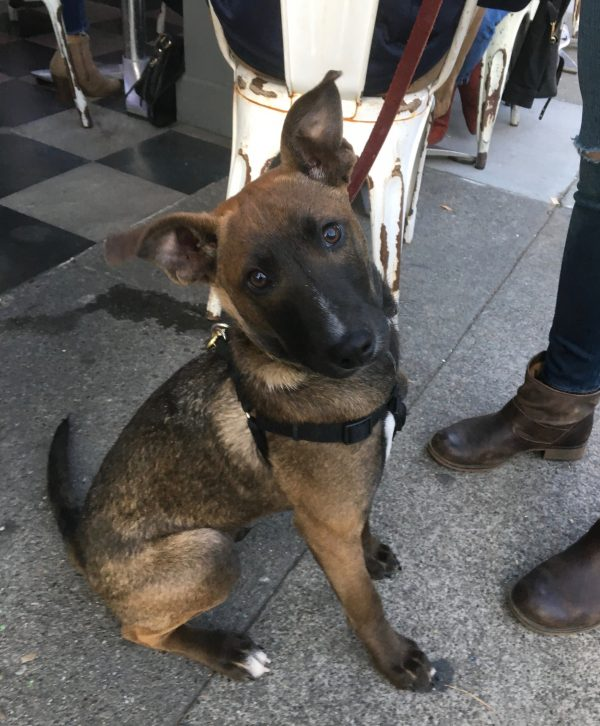 Guatemalan Street Puppy