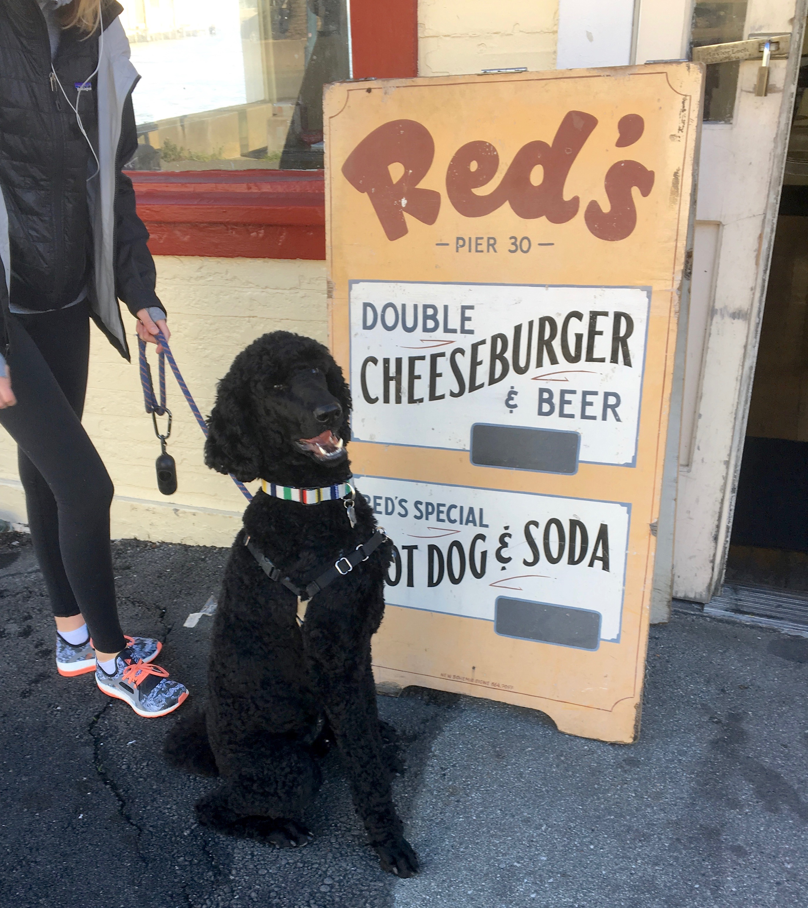 Black Standard Poodle Sitting In Front Of Hot Dog And Cheeseburger Sign