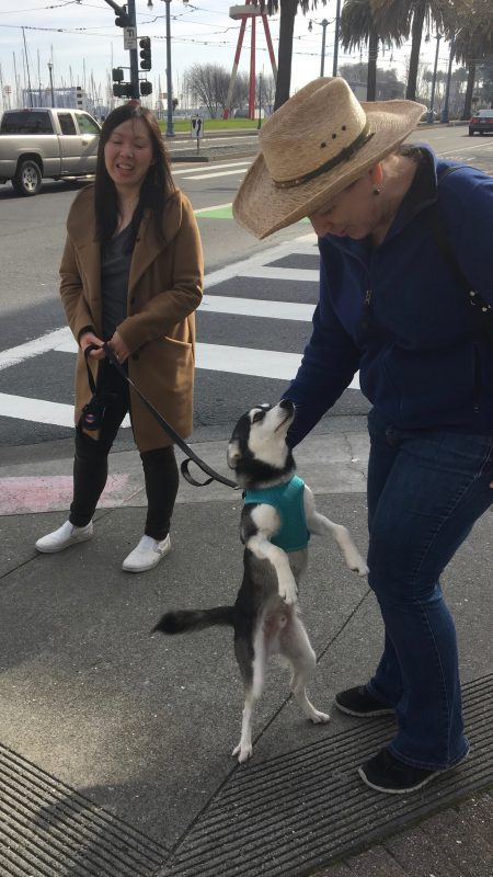 Woman Petting Klee Kai Puppy Who Is Standing On His Hind Legs