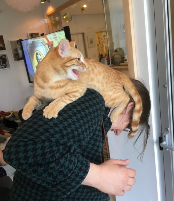 Marmalade Tiger Tabby Mounted On A Woman