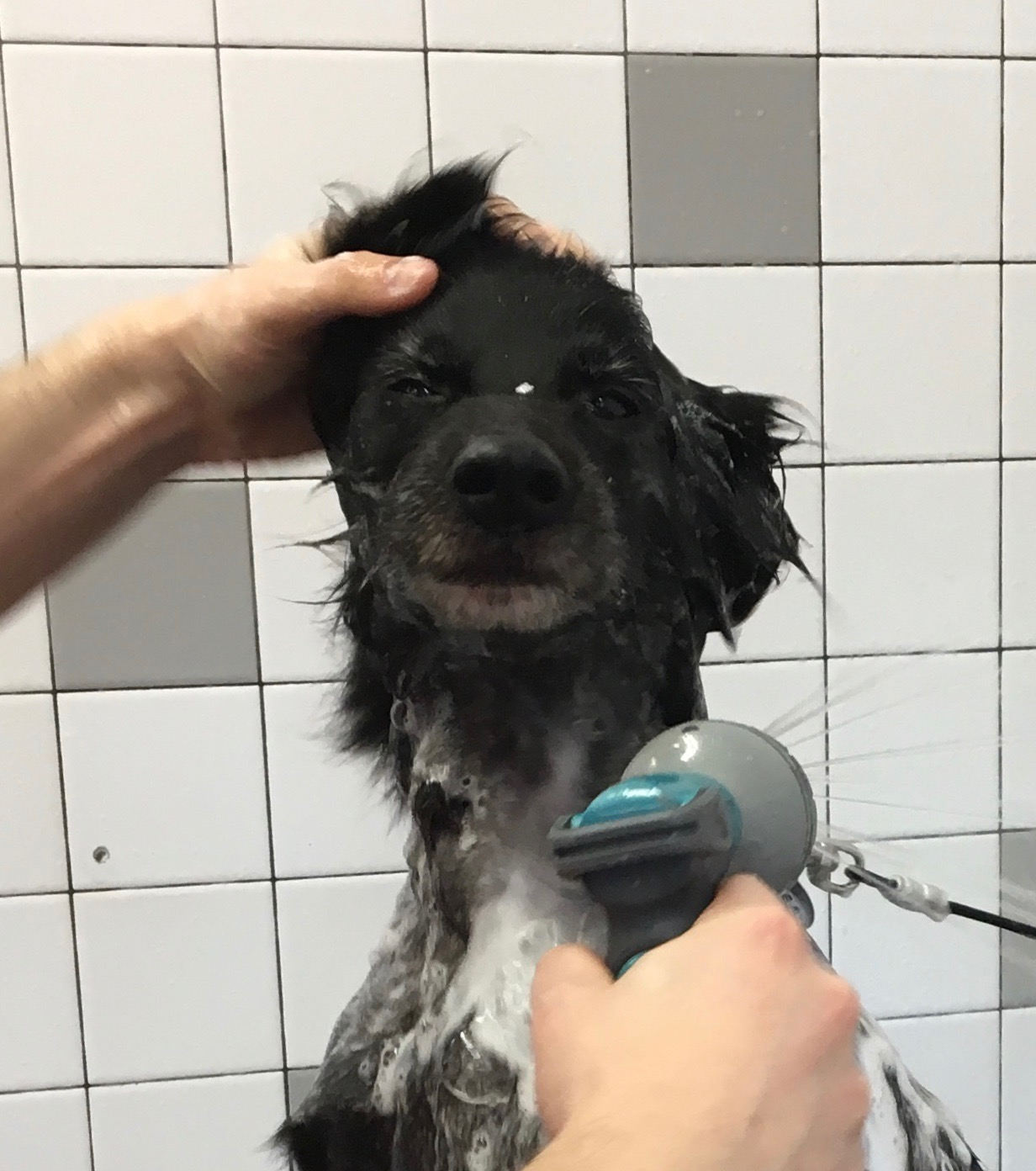 The Saddest, Most Disgruntled Wet Border Collie In The Entire Universe