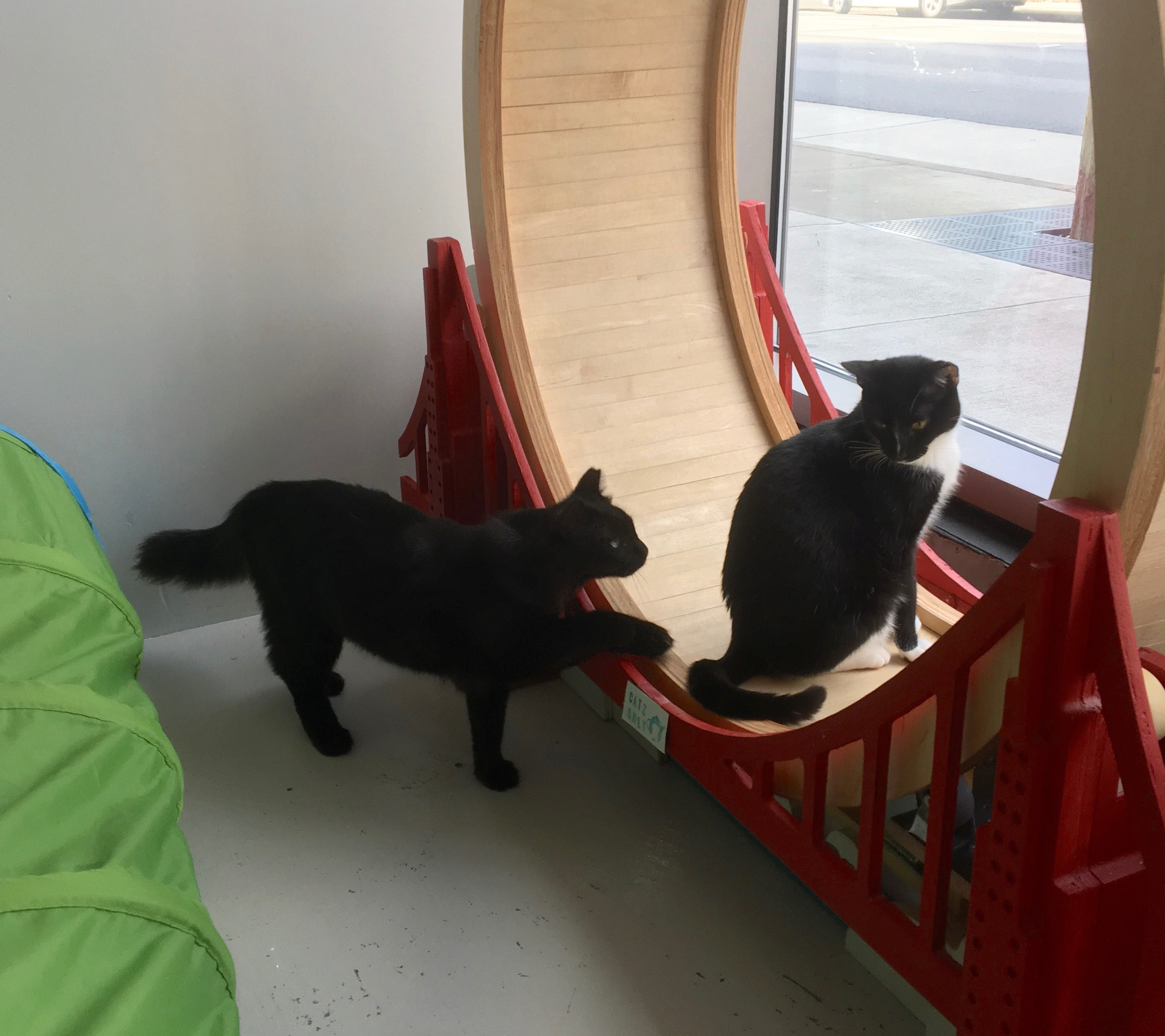 Two Cats Near A Window
