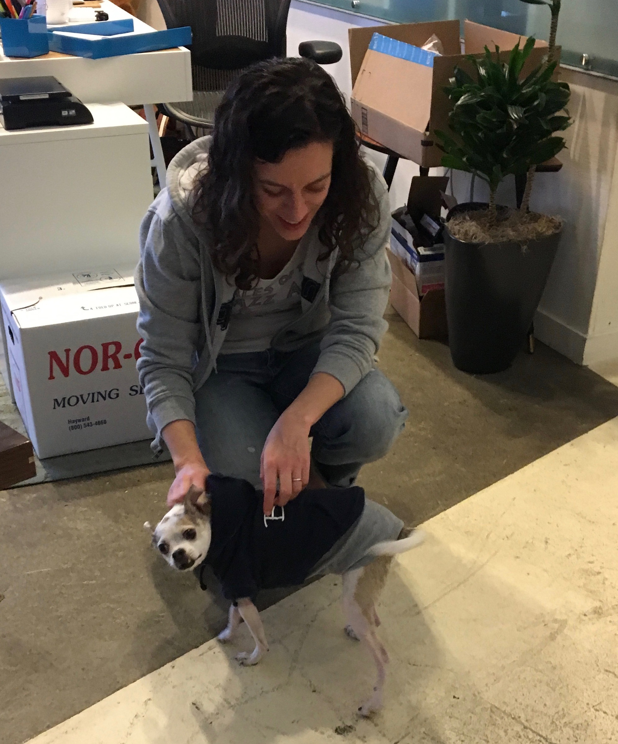 Woman In Sweatshirt Petting Chihuahua In Sweatshirt