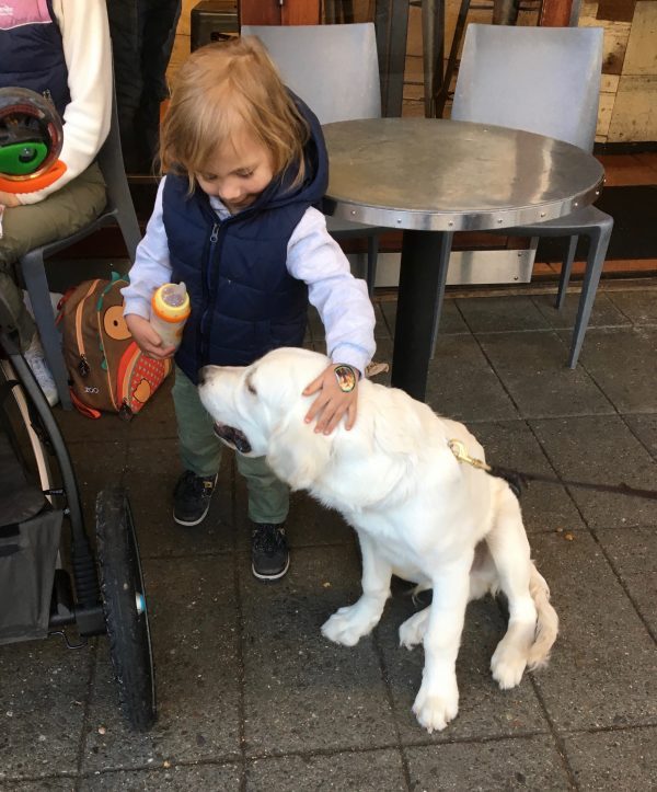 Little Girl Petting English Cream Golden Retriever Puppy
