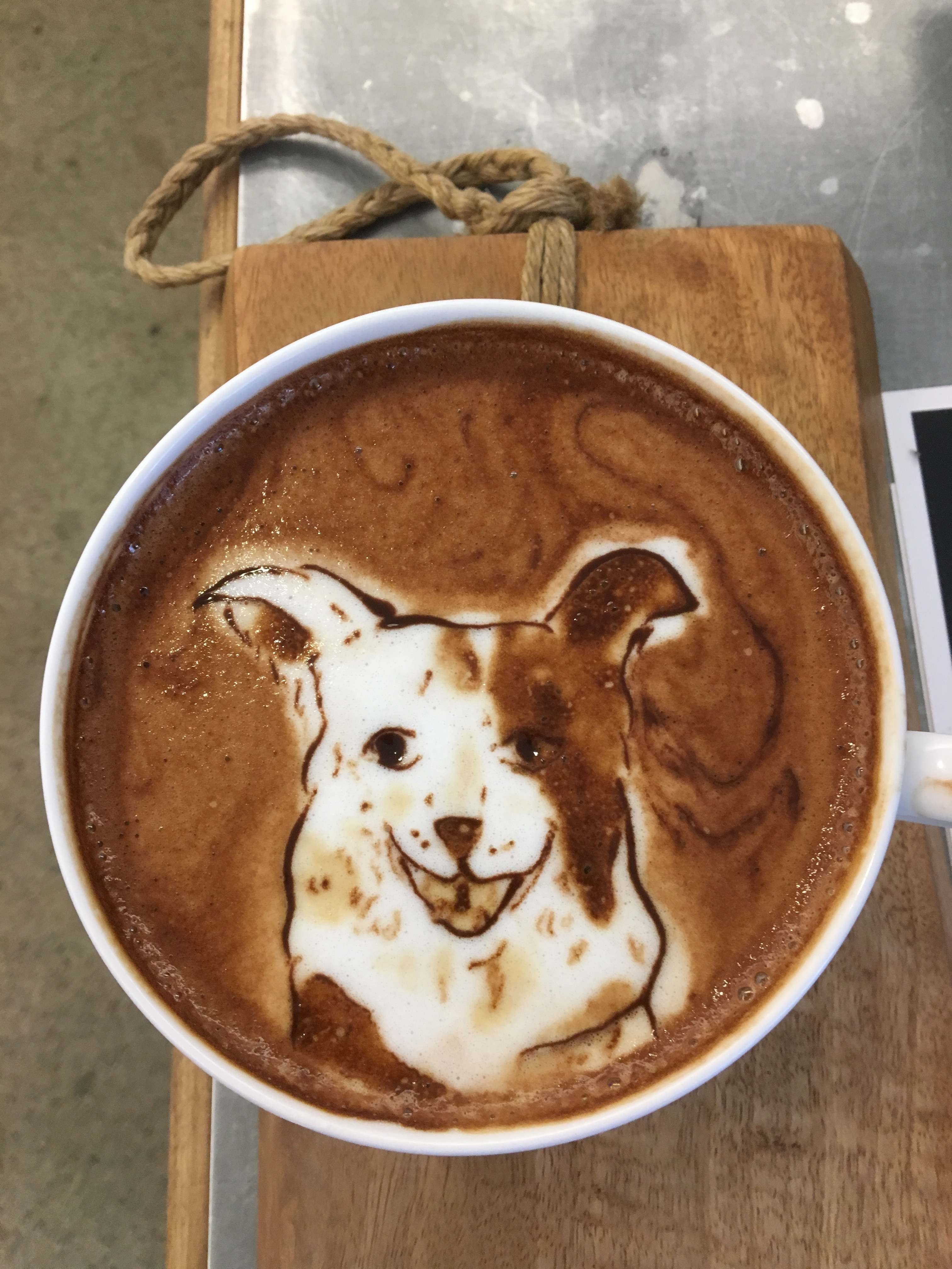 Border Collie Latte Art By Melaquino