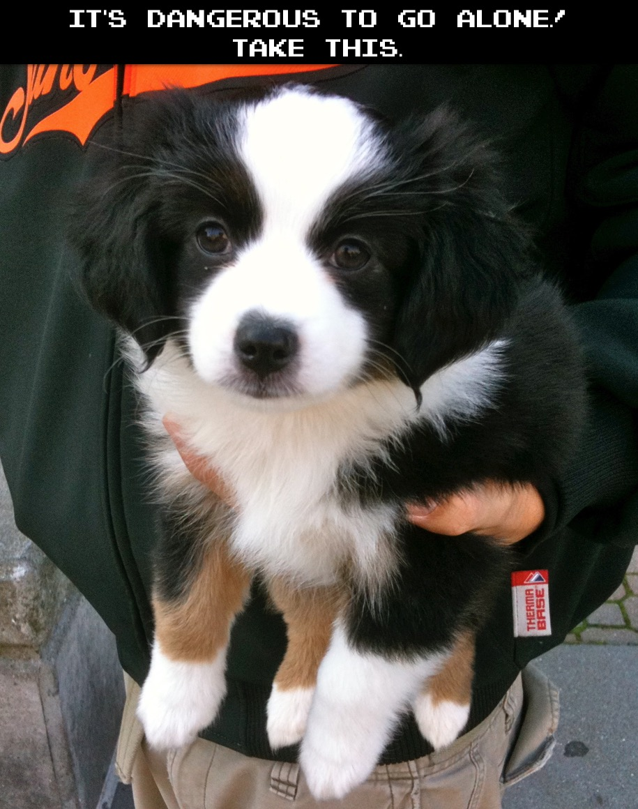 It's Dangerous To Go Alone, Take This Puppy