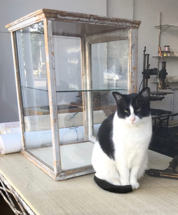 Tuxedo Cat Sitting Next To Antique Display Case