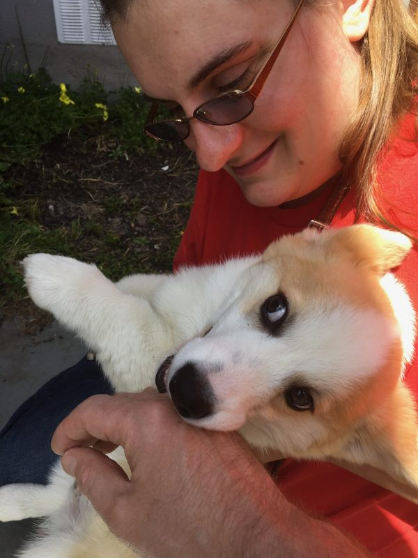 Pembroke Welsh Corgi Puppy Being Held By Woman And Gnawing On Photographer's Hand
