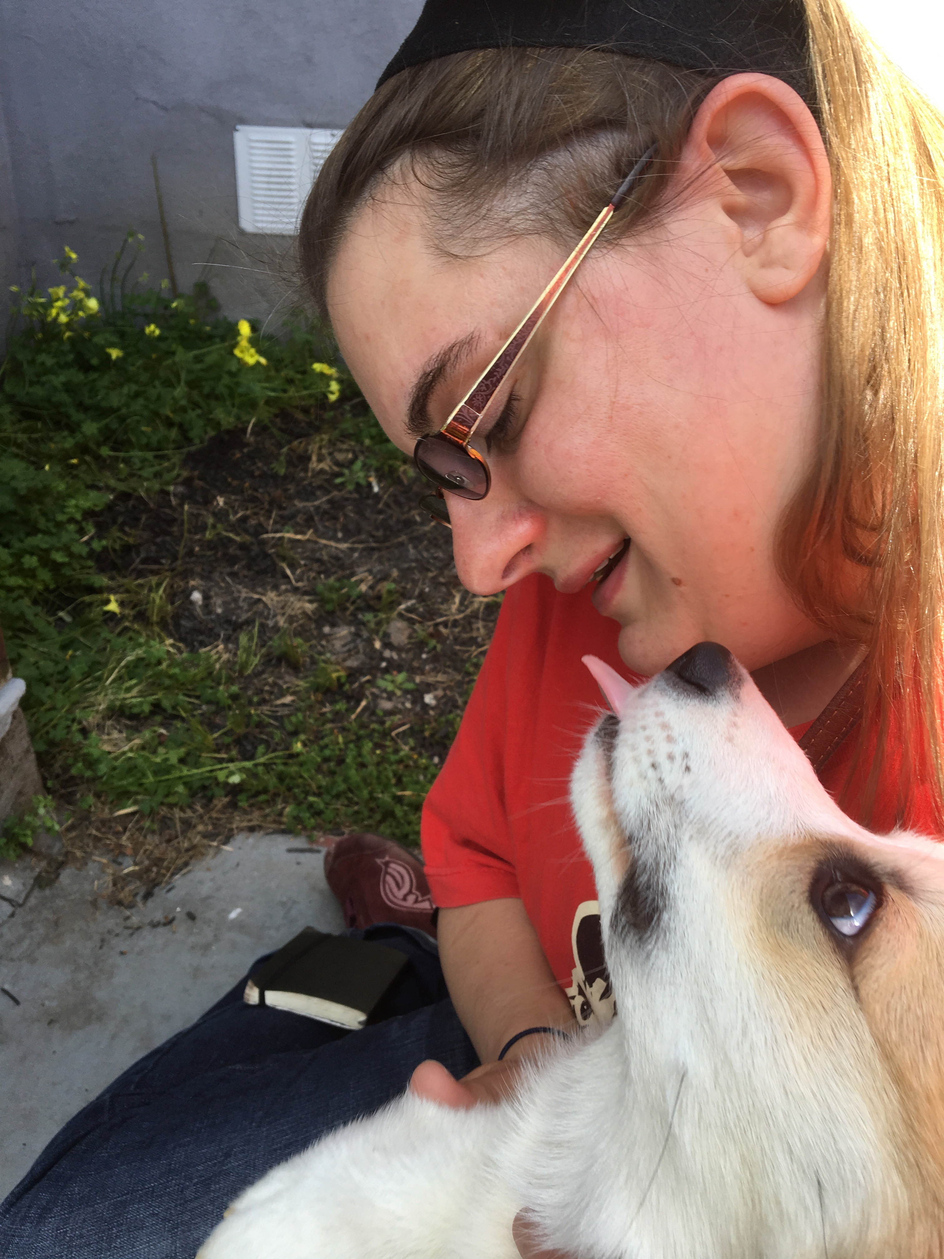 Pembroke Welsh Corgi Puppy Licking Woman's Face