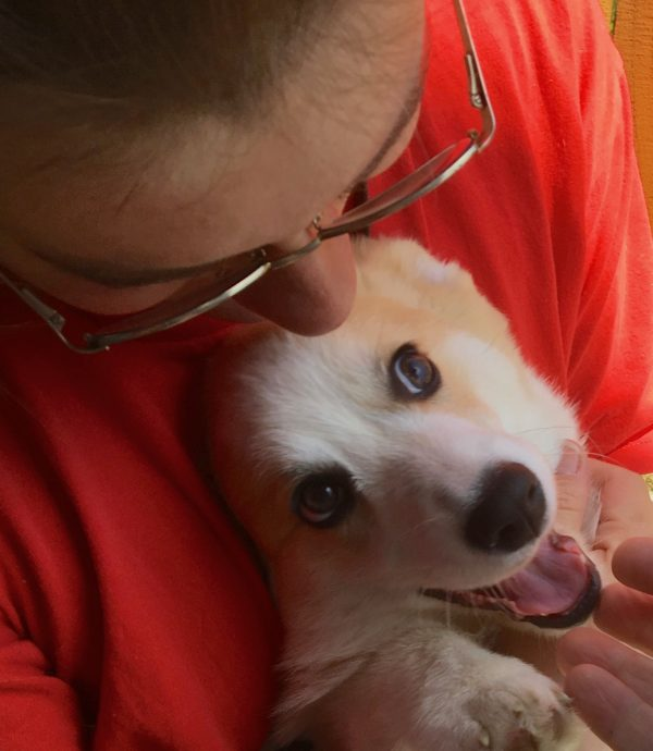 Woman Cuddles A Delighted, Derpy Pembroke Welsh Corgi Puppy