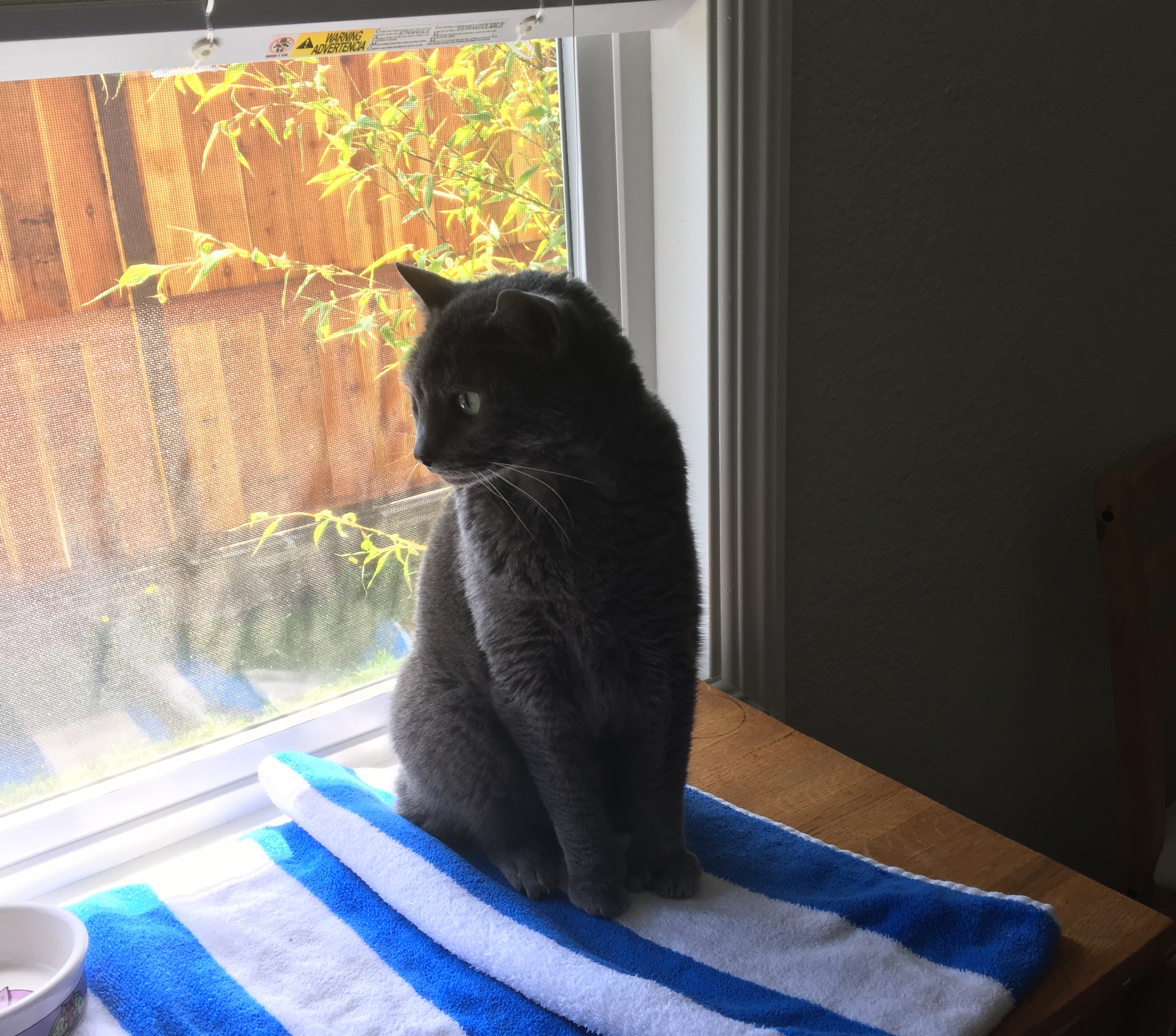 Grey Kitty In Sitting In A Window