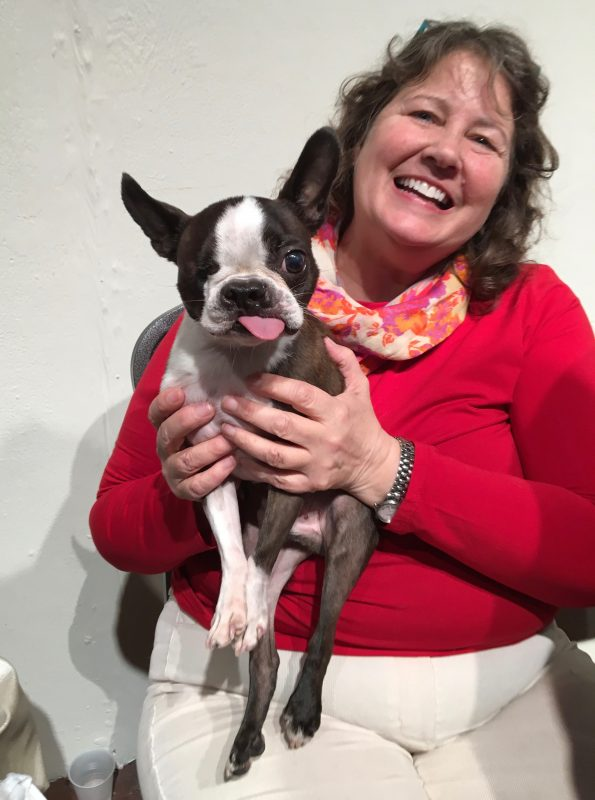 One-Eyed Boston Terrier With His Tongue Permanently Stuck Out