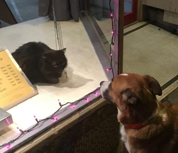 Black Cat Looking Out At Dog From Behind Store Window