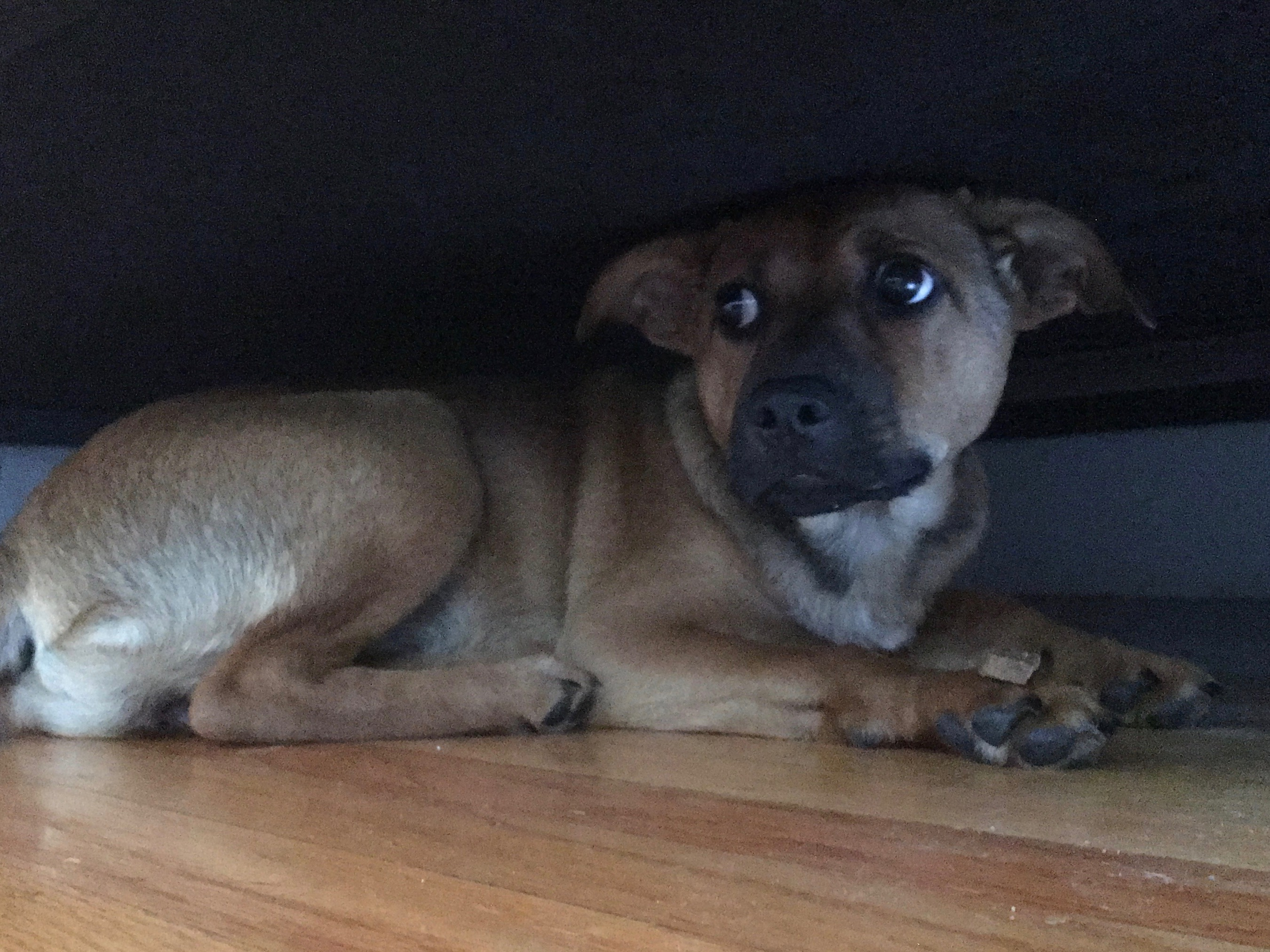 Puppy Hiding Under Bed With Treat Balanced On Her Paw