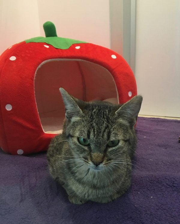 Cat In Front Of Strawberry-Shaped Cat Bed