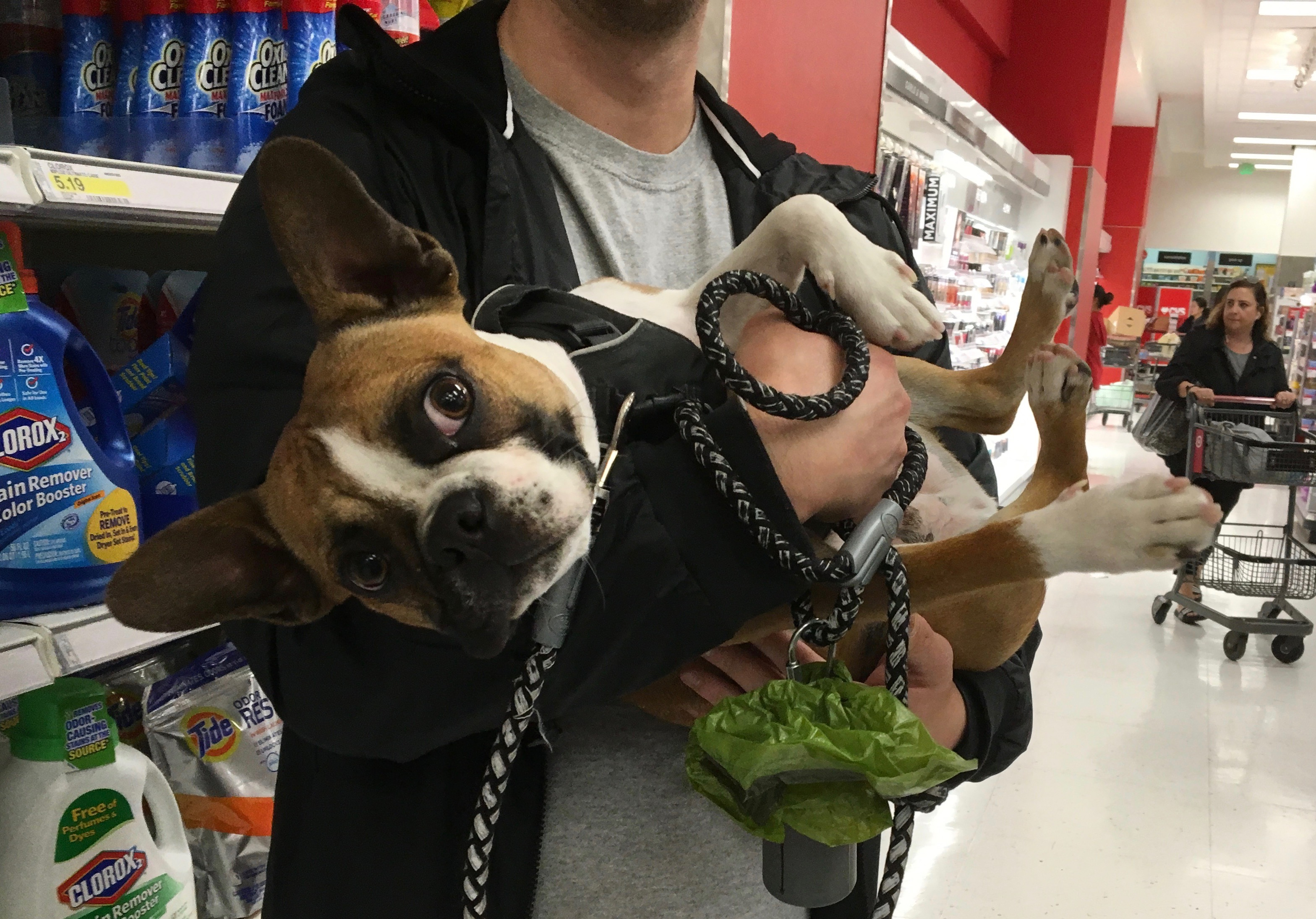 Man Holding French Bulldog