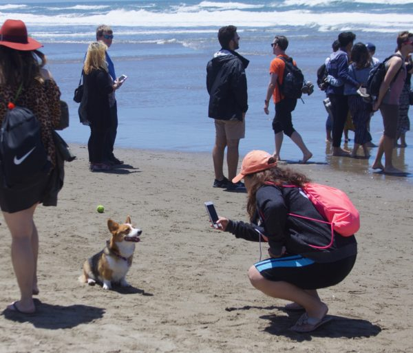 Woman Taking A Picture Of A Grinning Corgi