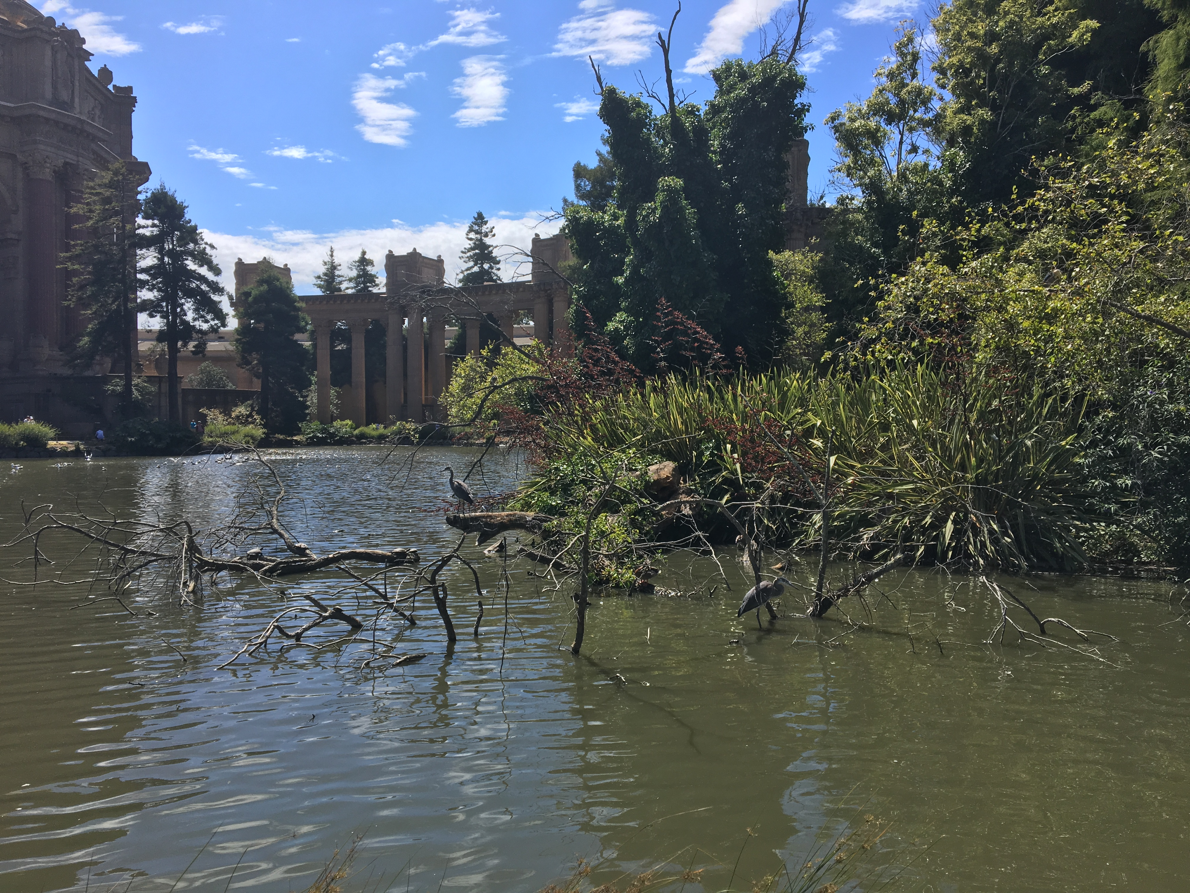 Wildlife in Pond Outside Palace of Fine Arts Theater in San Francisco