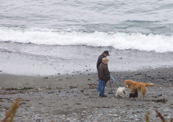 Three Dogs And Two Humans Greet One Another On A Beach