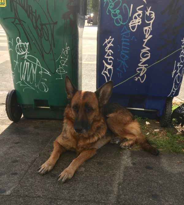 German Shepherd Sitting In Front Of Trash Bins