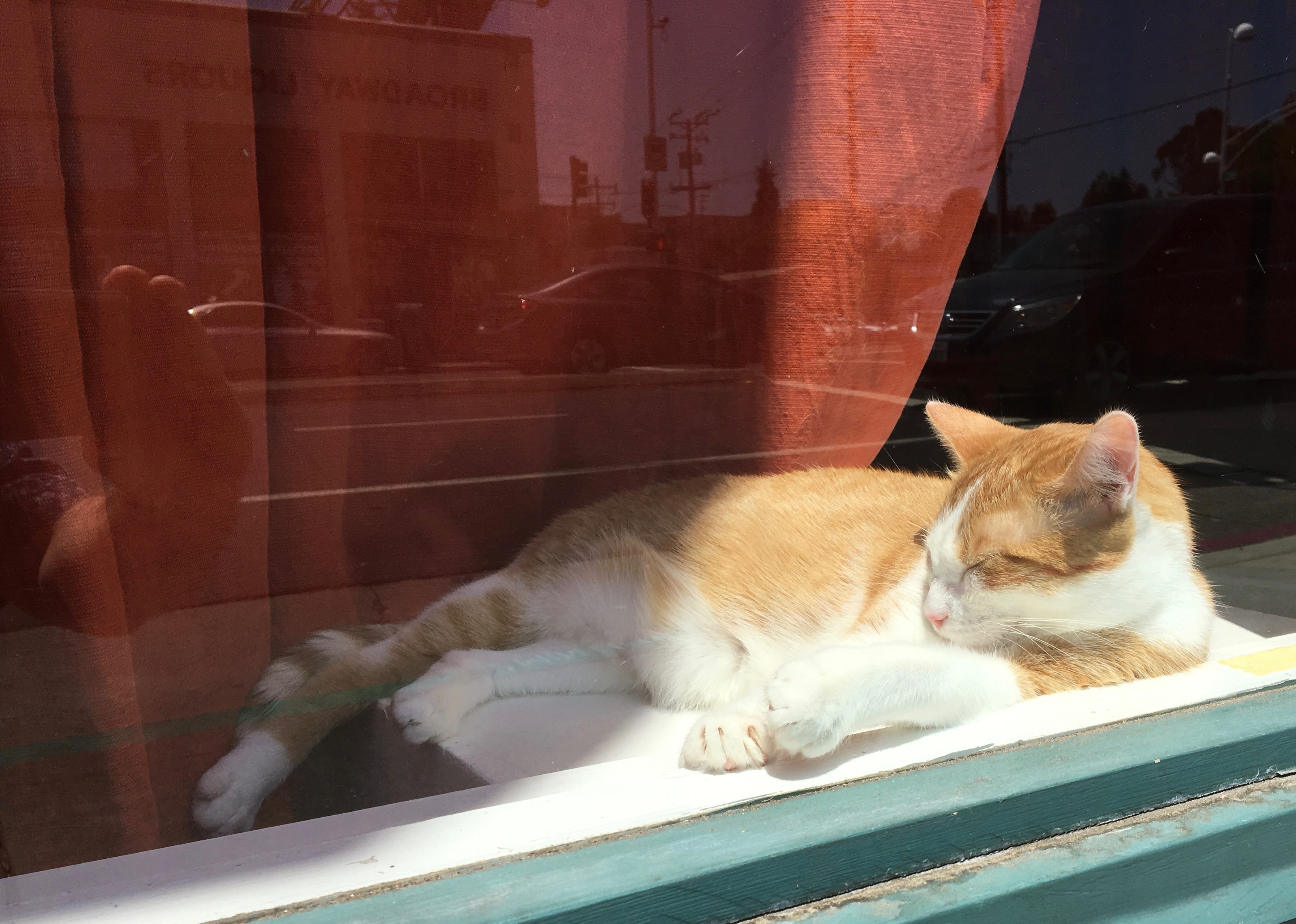 Marmie Cat Sunning Herself In The Window