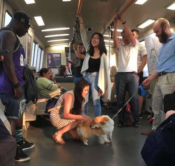 People On BART Admiring Corgi