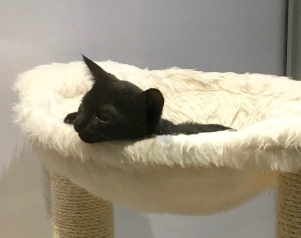 Black Kitten Lying In A Suspended Cat Bed