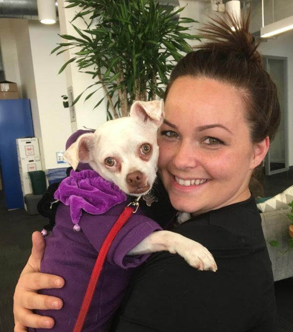 Woman Holding A White Chihuahua Mix In A Purple Hoodie