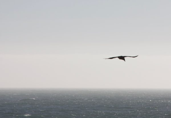 Bird Silhouetted Against The Sky Over Ocean