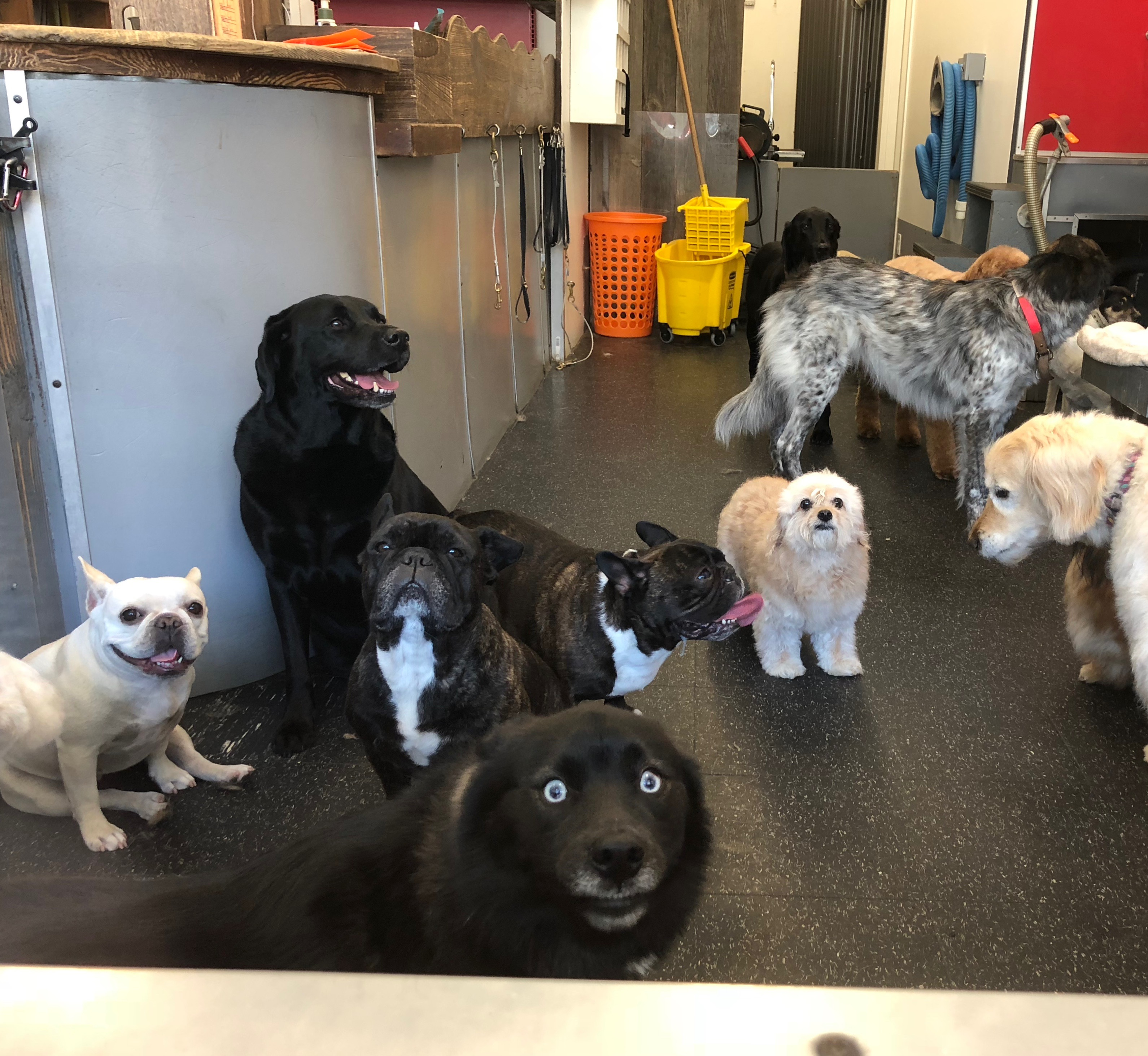 Group Of Dogs In A Dog Grooming Parlor Window