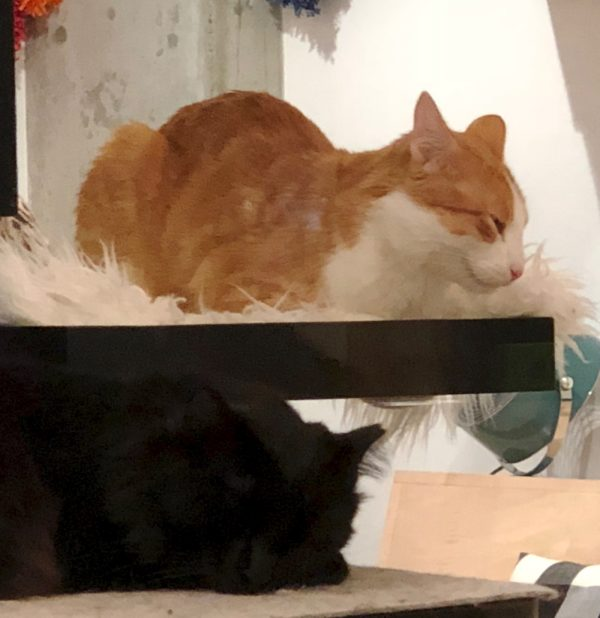 Two Kitties In A Bunk Bed