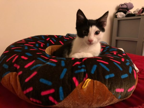 Grey And White Kitten Sitting In A Giant Donut