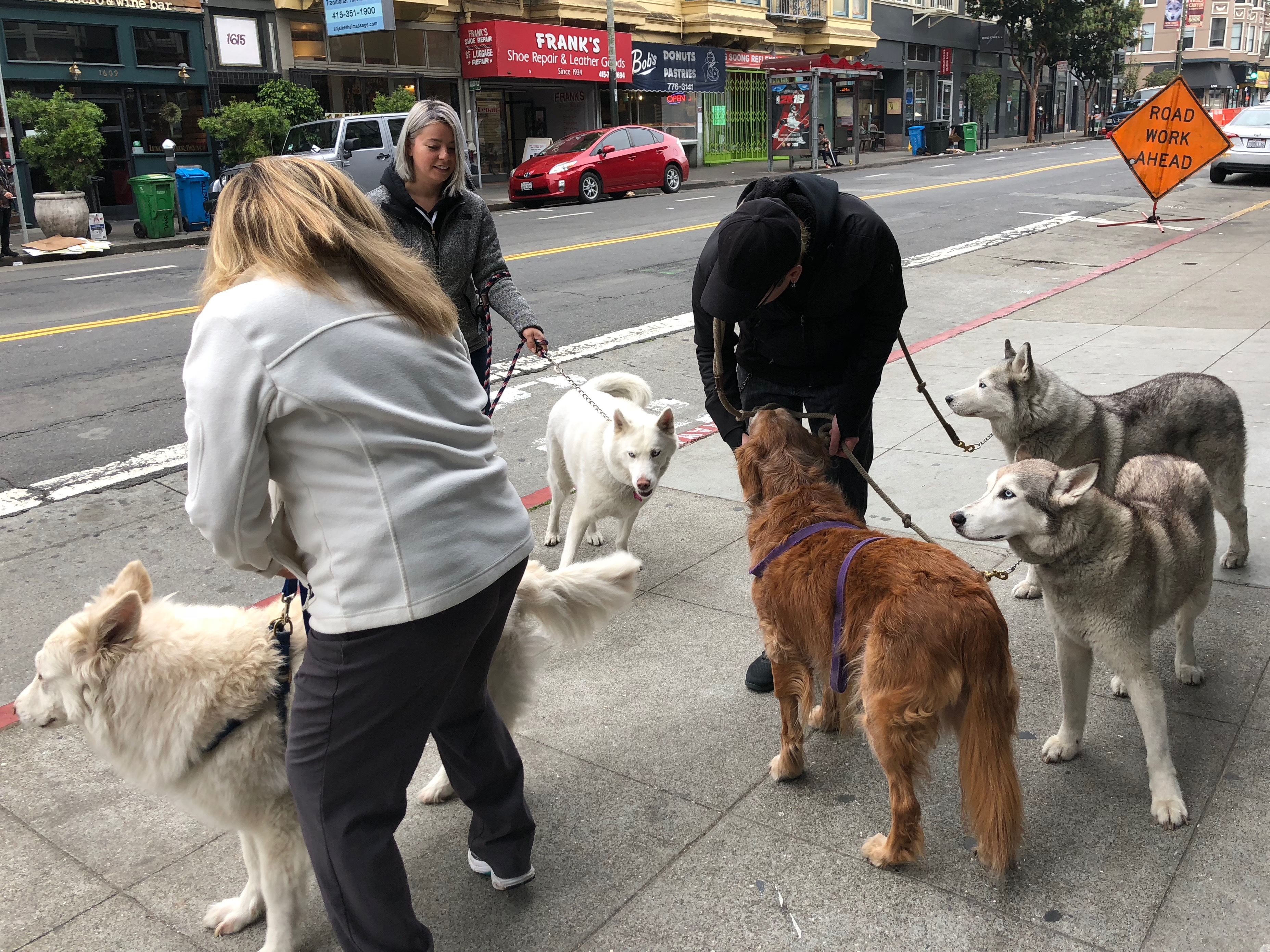 Four Huskies And A Golden Retriever Surrounding Three People