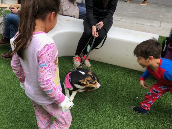 Children Looking At Cute Tricolor Pembroke Welsh Corgi