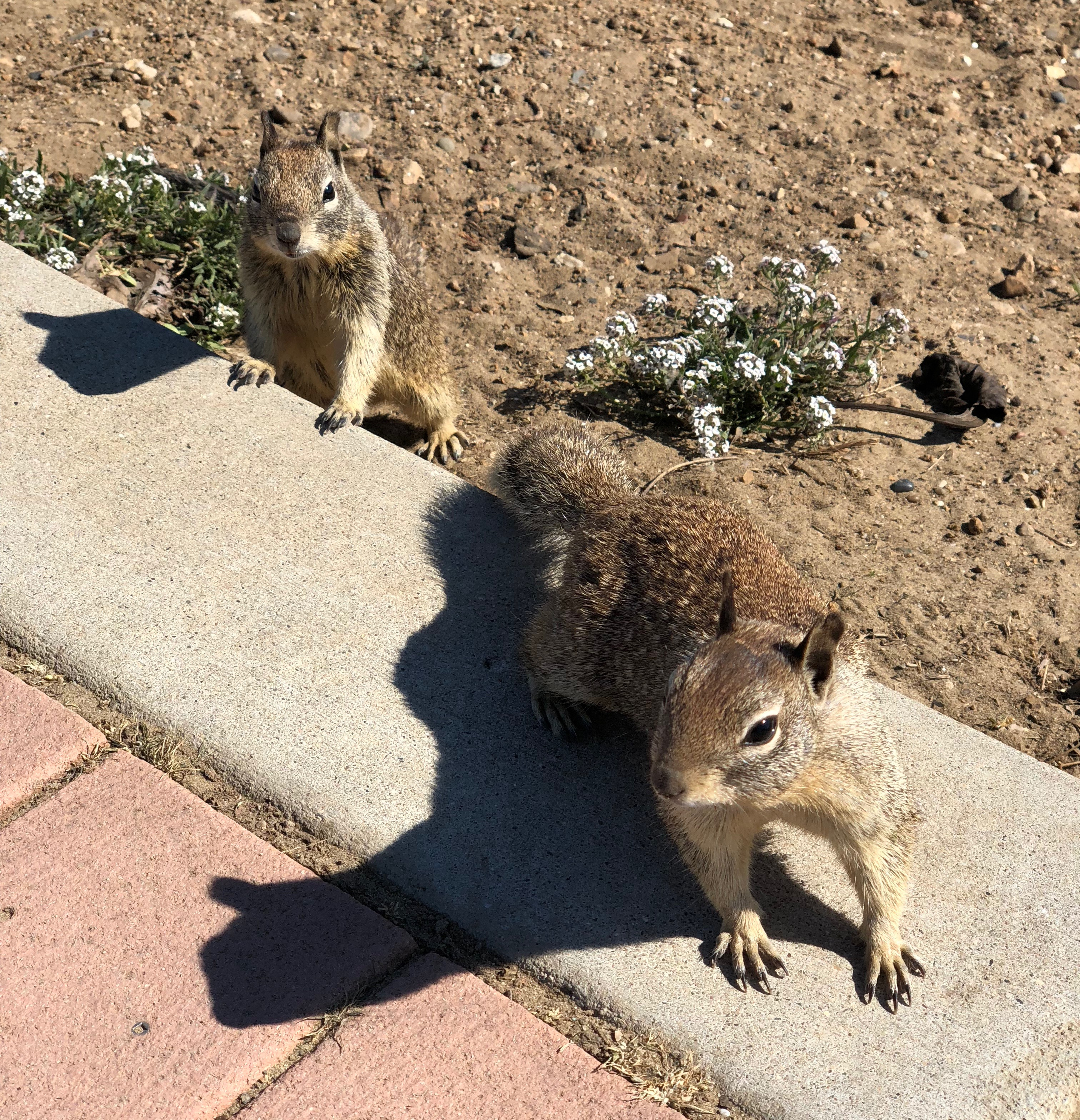 Two Ground Squirrels Uncomfortably Close To Photographer