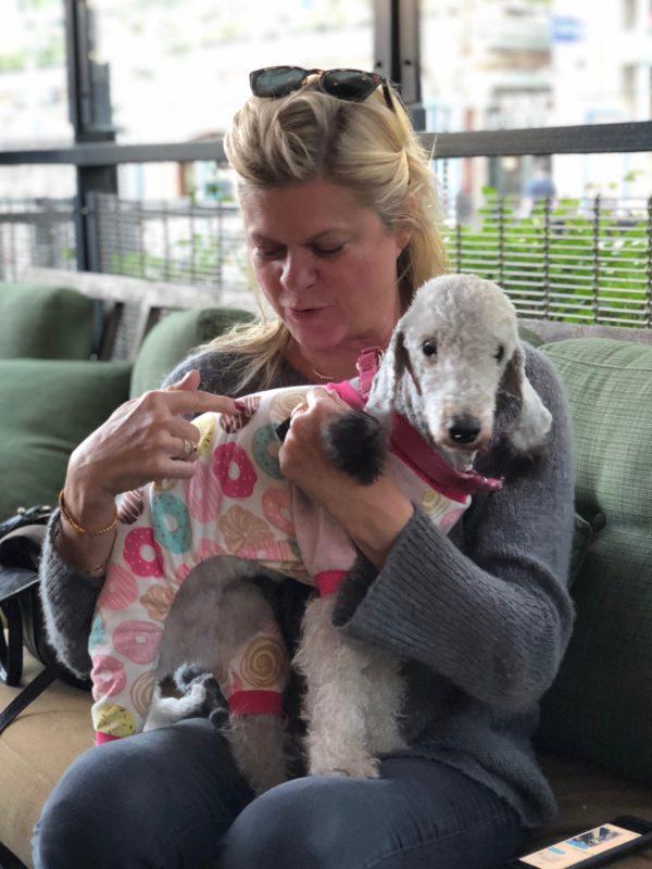 Woman Holding Bedlington Terrier Dressed In Pajamas
