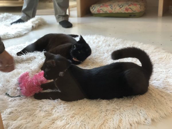 Two Black Cats On A White Mat Playing With Toys