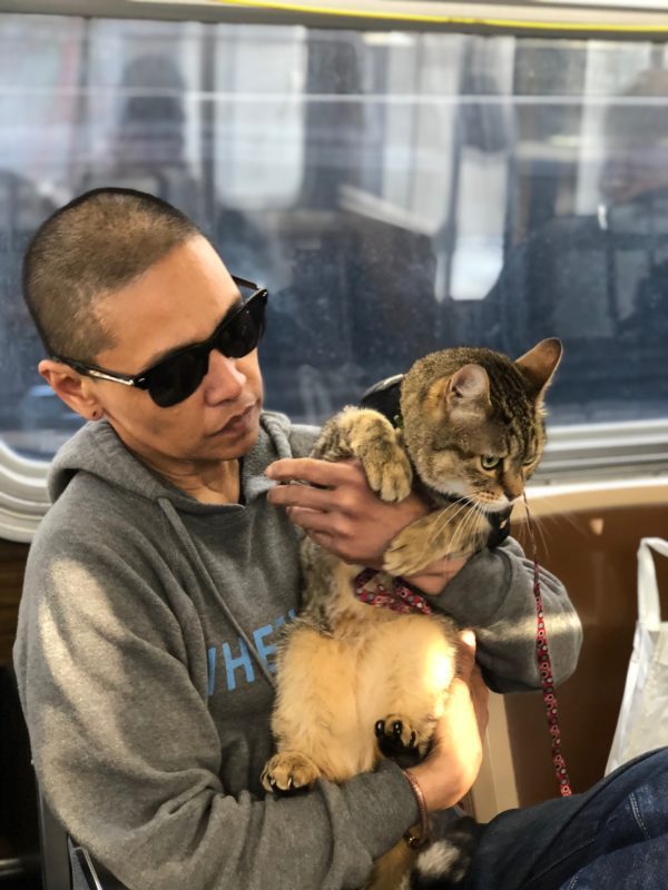 Person Holding Cat Up And Exposing His Belly On A MUNI Bus